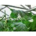 Кука за растения | 321199 - 504726