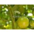 Oпорни носачи за растения | 321201 - 504729