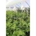 Ролка със сезал за домати и краставици | 321202 - 504731