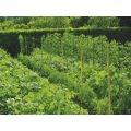 Мрежа за краставици | 230703 - 591235